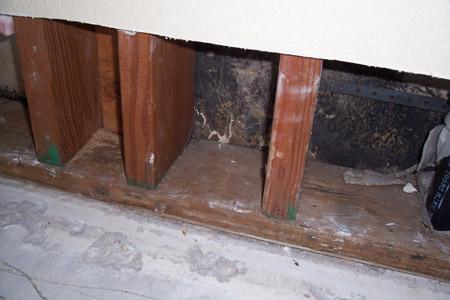 how to kill black mold on drywall